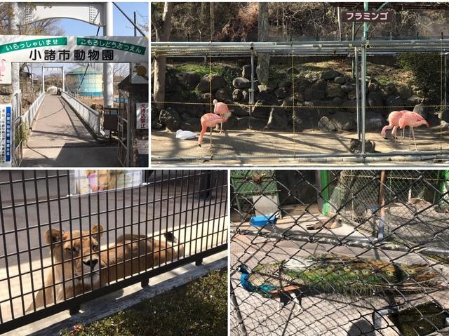動物園コラ.JPG
